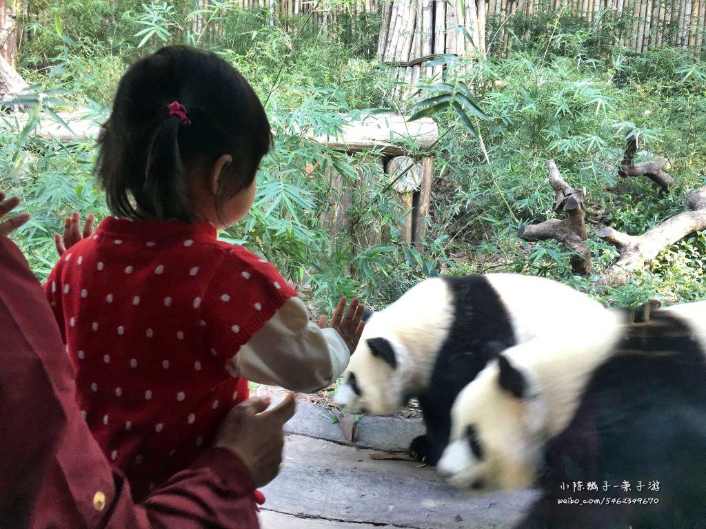 白底壁纸可爱熊猫