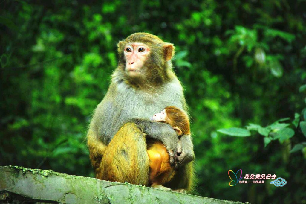 先看下我们可爱的猴子!大师兄,我是你二师弟啊!(张家界国家森林公园)