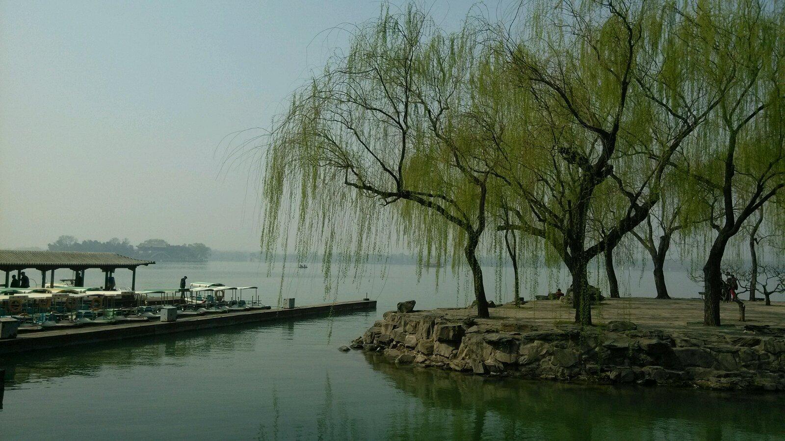 壁纸 垂柳 风景 柳树 摄影 树 桌面 1600_900
