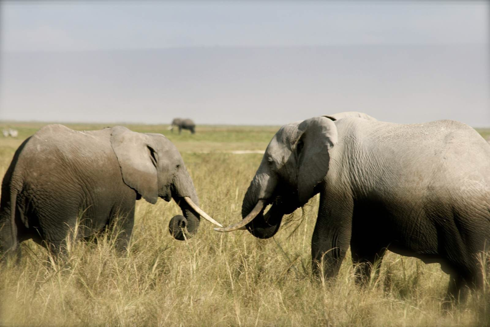 动物 犀牛 野生动物