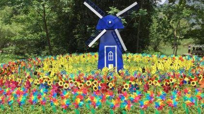 七彩蝶园第一届风车节即将开始,风车在清风吹拂下缓缓转动,流光溢彩