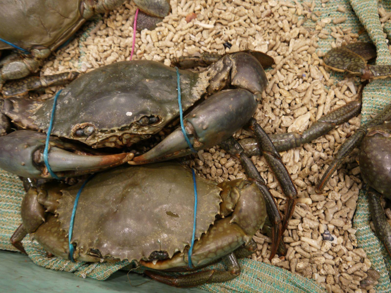 对于著名的悉尼鱼市场,喜欢吃海鲜的朋友一定不要贪睡,越早去人越少.