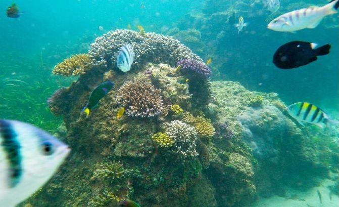 巴厘岛海底漫步_畅游海底世界