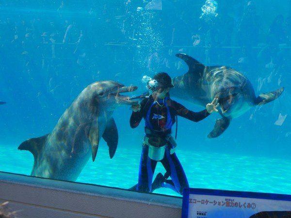 展示海豚的牙齿