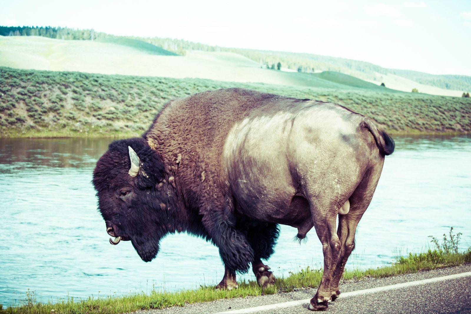 动物 牛 犀牛 野生动物