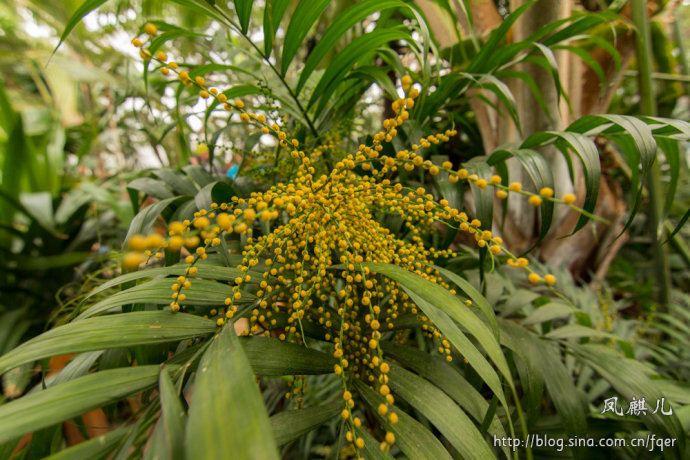 [凤麒儿]北京植物园——热带植物温室馆