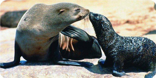 不同花纹形状海洋动物图片大全