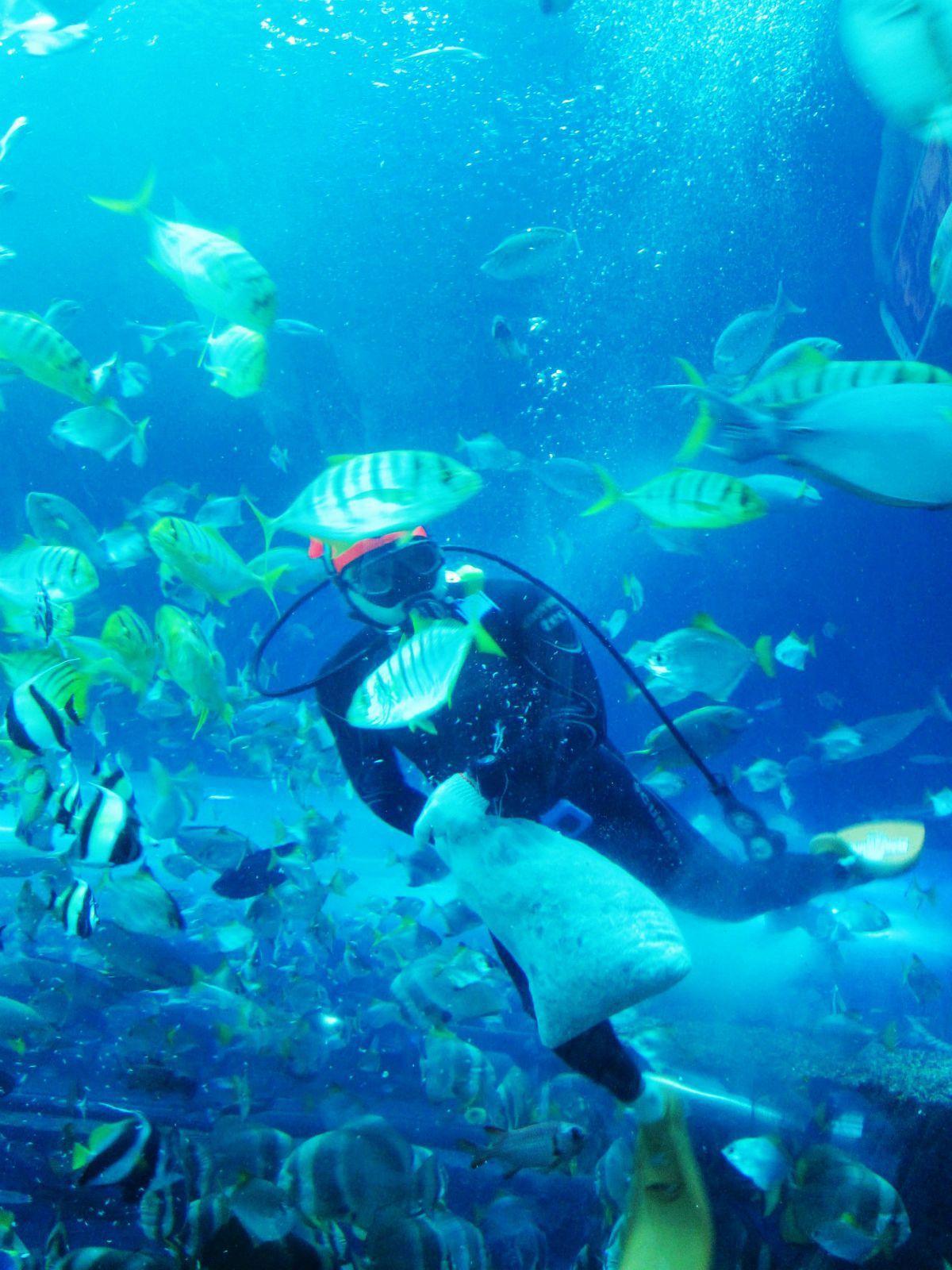 说这家海洋馆是亚洲第二大,门票看比101,个人觉得还是值得一去的.