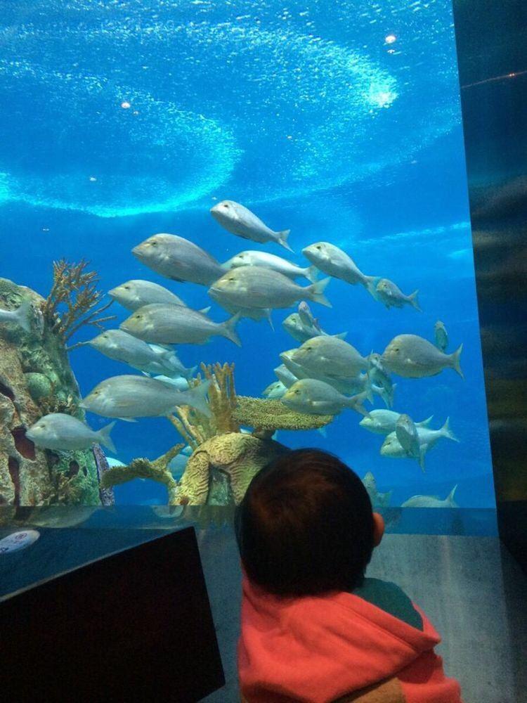 珠海海洋王国 海底餐厅