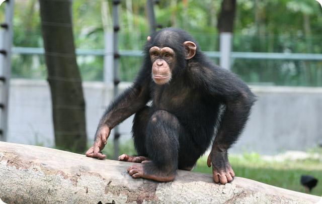 金丝猴,黑颈鹤等国家一级保护动物