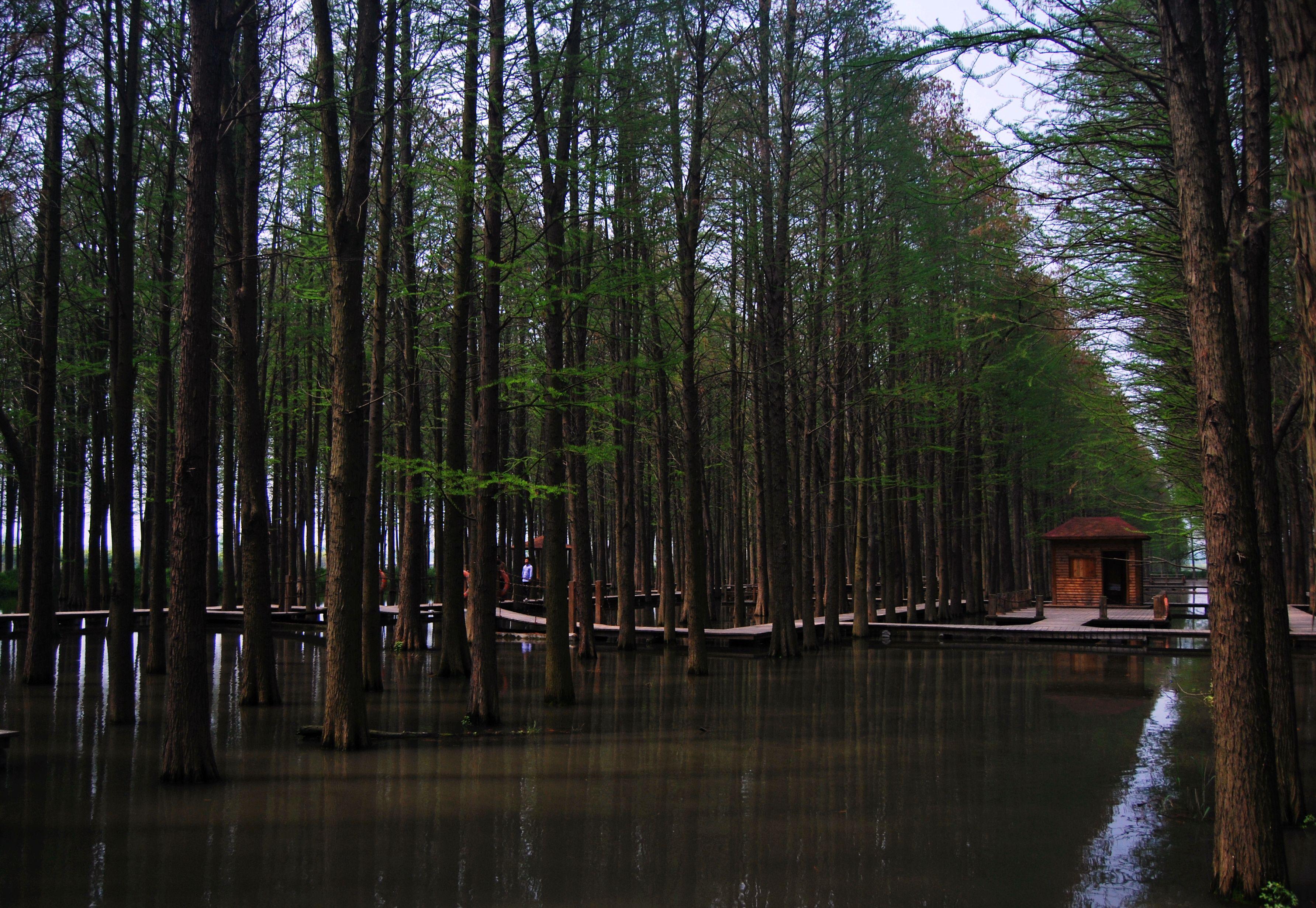 (我们没有买漂流的船票) 兴化 李中水上森林公园,我们全程走的栈道,20图片