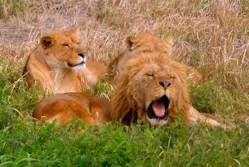 去看看冬眠睡醒的动物们吧!哈哈