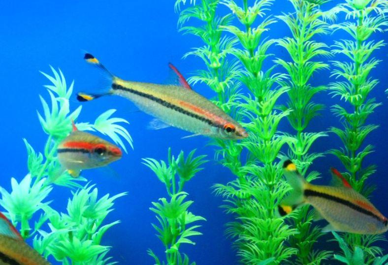 壁纸 海底 海底世界 海洋馆 水族馆 788_538