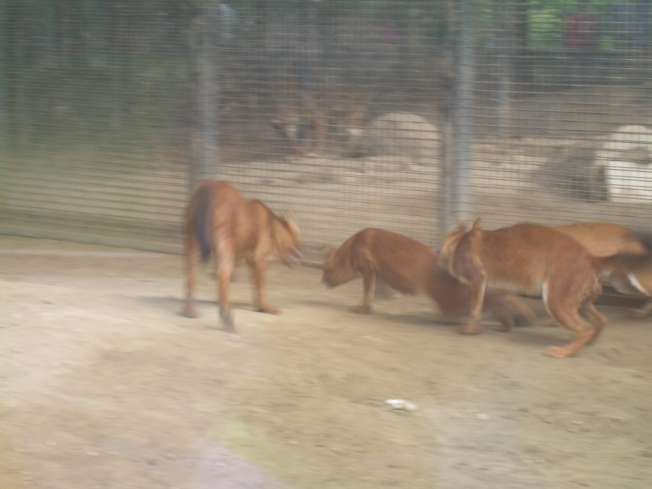 动物园里看狼 - 北京游记攻略【携程攻略】