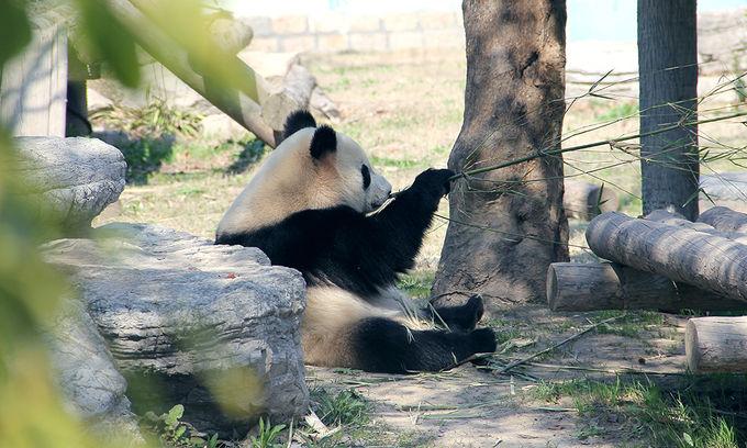 上海野生動物園    -4