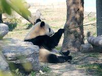 上海华亭宾馆1晚+上海野生动物园门票+室内游泳池+WIFI·【五星新品】