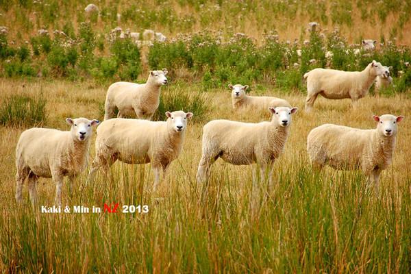 绵羊简笔画顺序