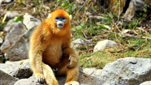 1分 (296条点评) 79 秦岭野生动物园,位于西安市长安区,动物园园区分