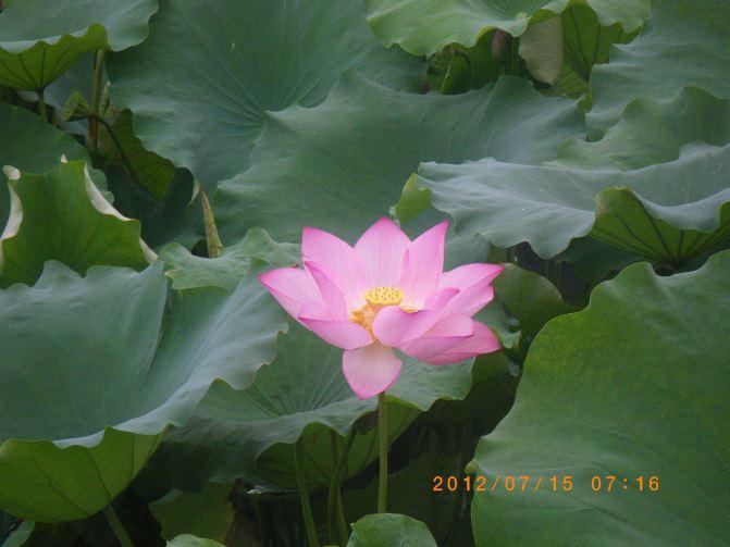 桐庐避暑上海大溪峡、杭州龙井九溪3日出发自写一篇v攻略攻略的作文图片