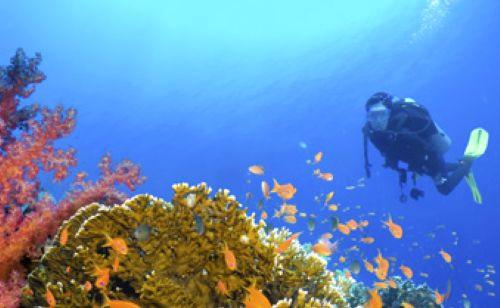 壁纸 海底 海底世界 海洋馆 水族馆 桌面 500_308