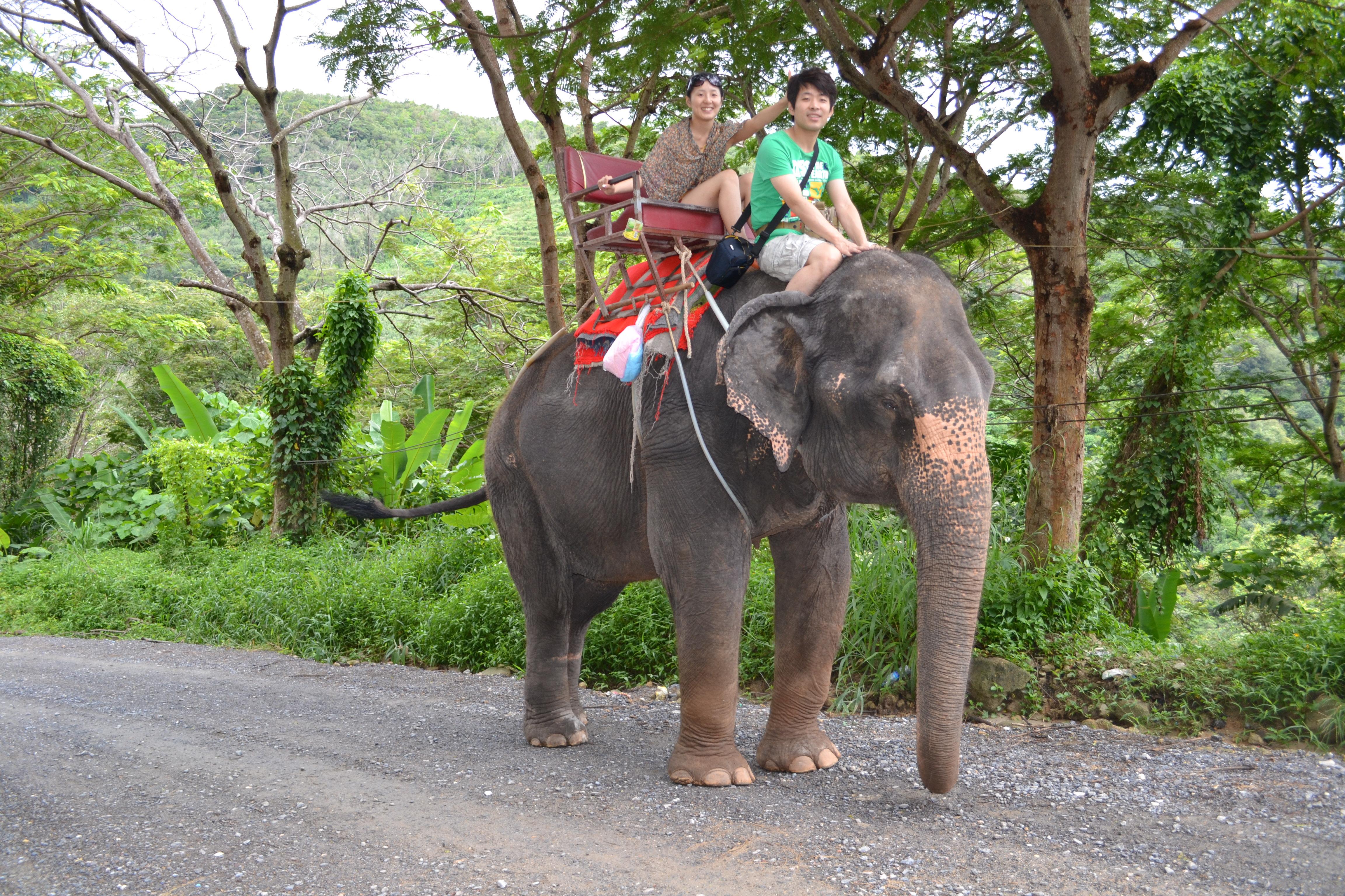 (都快尿成小溪了,咱们骑的大象可是母的哦,有40多岁了) 森林骑大象