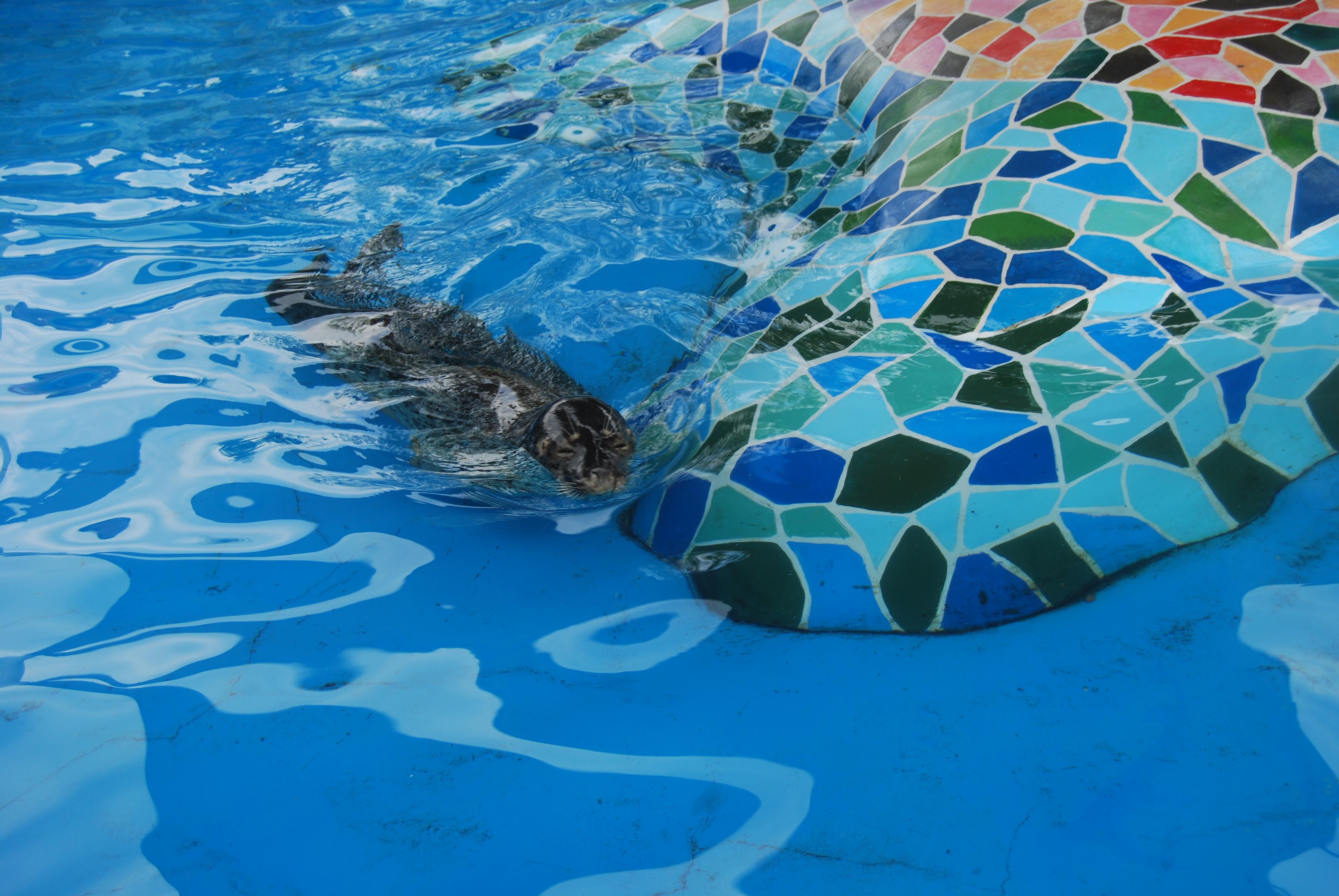 壁纸 海底 海底世界 海洋馆 水族馆 桌面 3872_2592