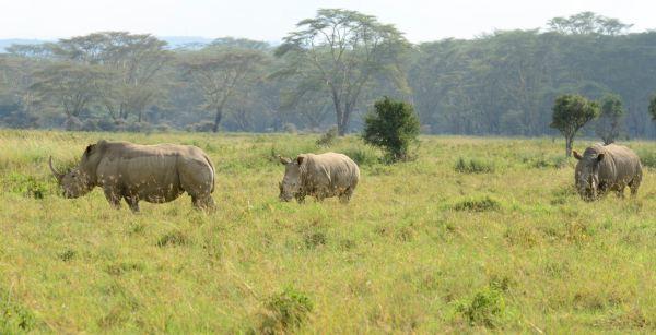 这儿的非洲水牛也很多