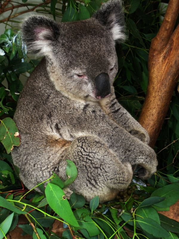 照片名称:悉尼野生动物园