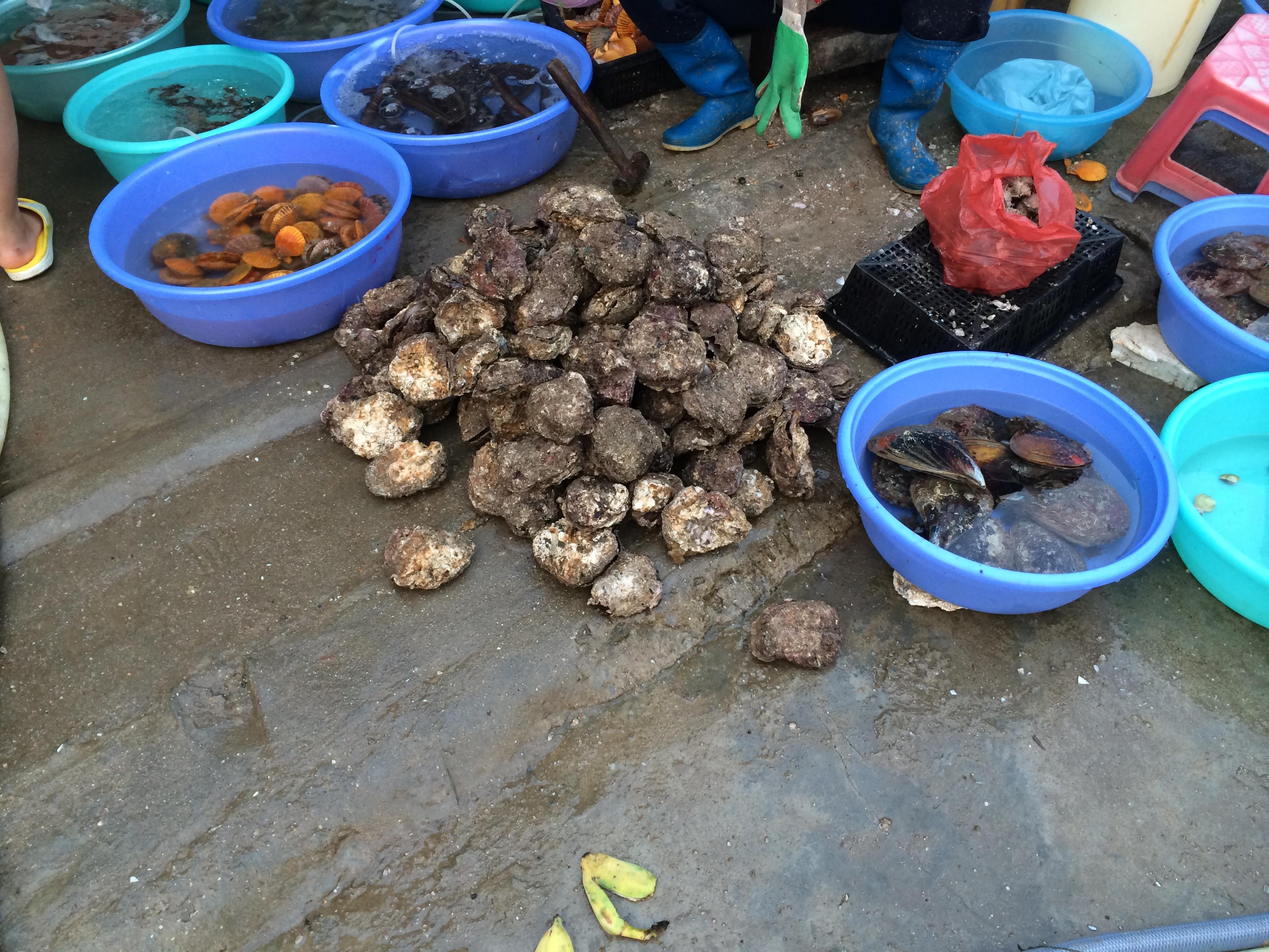 北海&涠洲岛,围绕海鲜市场的吃喝之旅