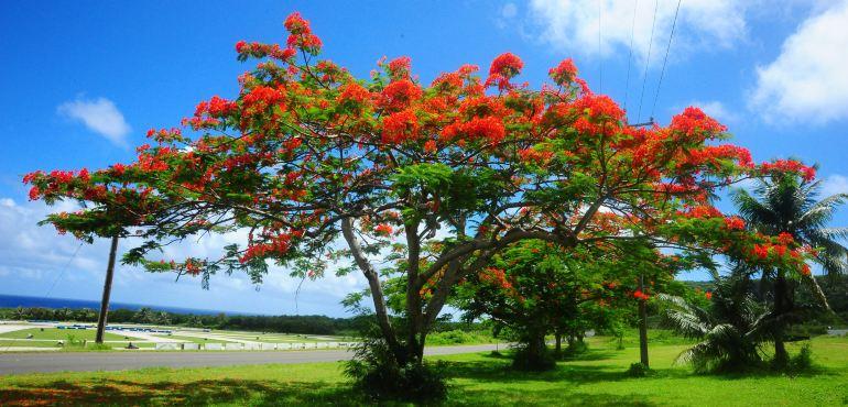 2016北马里亚纳群岛旅游攻略