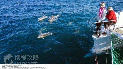 【陆】大洋路+澳野奇观+可伦宾野生动物保护区+毛利