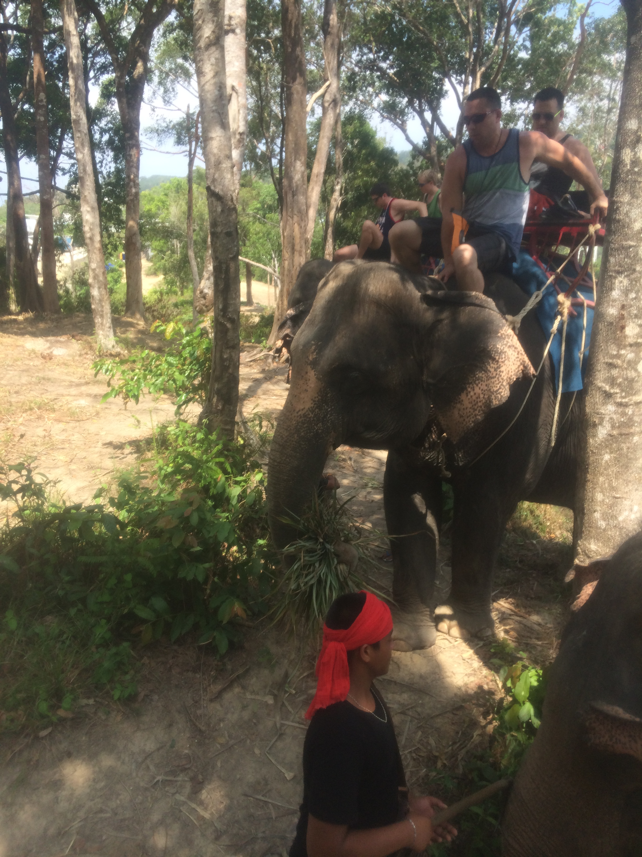 人家反而激动地好一个谢我~还有,大象真的好聪明好可爱,像一个大宝贝