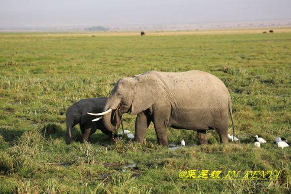 肯尼亚非洲狂野safari动物大迁徙之全攻略(海量美图)
