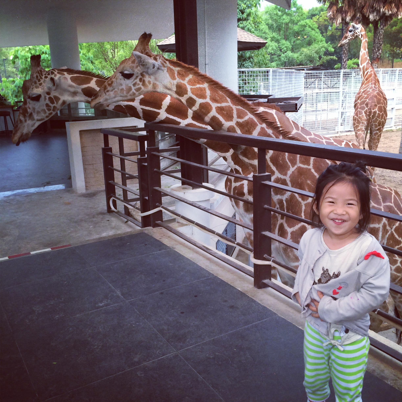 长颈鹿餐厅 离开餐厅,前往动物园内.