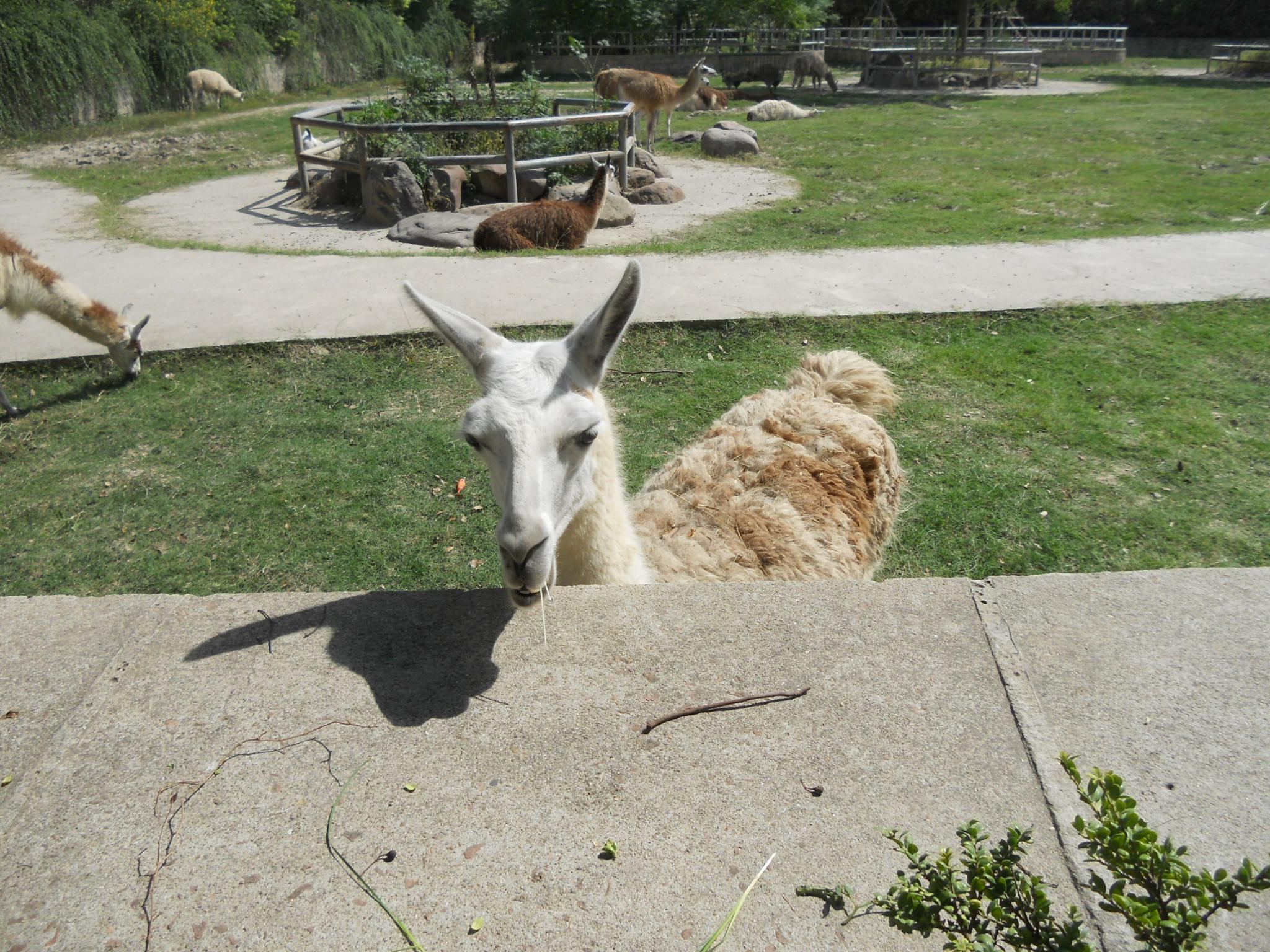 """今天借着上海野生动物园""""非洲动物节"""
