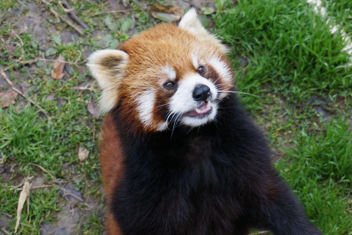 上海野生動物園    -2