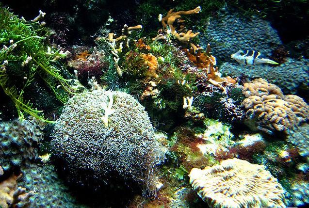 壁纸 海底 海底世界 海洋馆 水族馆 637_429