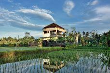 罗威纳海滩-巴厘岛-M33****0868