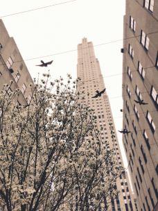 洛克菲勒中心-纽约-雪3飞who