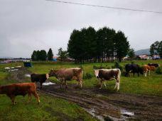 蒙牛工业旅游景区-和林格尔-滇国剑客