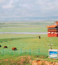 若尔盖游记图文-八月若尔盖·去赴一场草原之约