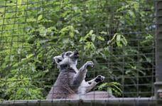 柳岸野生动物保护区-基督城-小小呆60