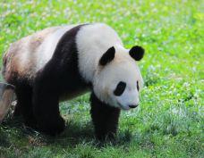 秦岭野生动物园-西安-C-IMAGE