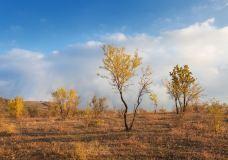 海拉尔国家森林公园-海拉尔
