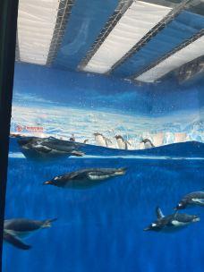 哈尔滨极地公园·海洋馆-哈尔滨-孙彦呀呀呀呀