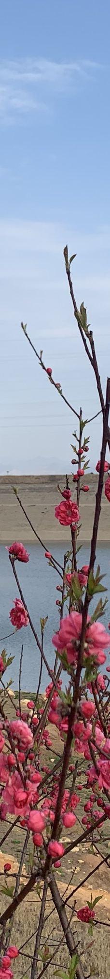茶乡花海景区-茶陵