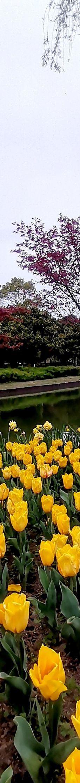 上海鲜花港-上海