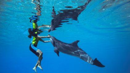 亚特兰蒂斯海豚湾 dolphin bay (20)