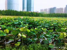 艾溪湖湿地公园-南昌-第二号爱人