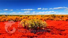 大漠胡杨旅游区